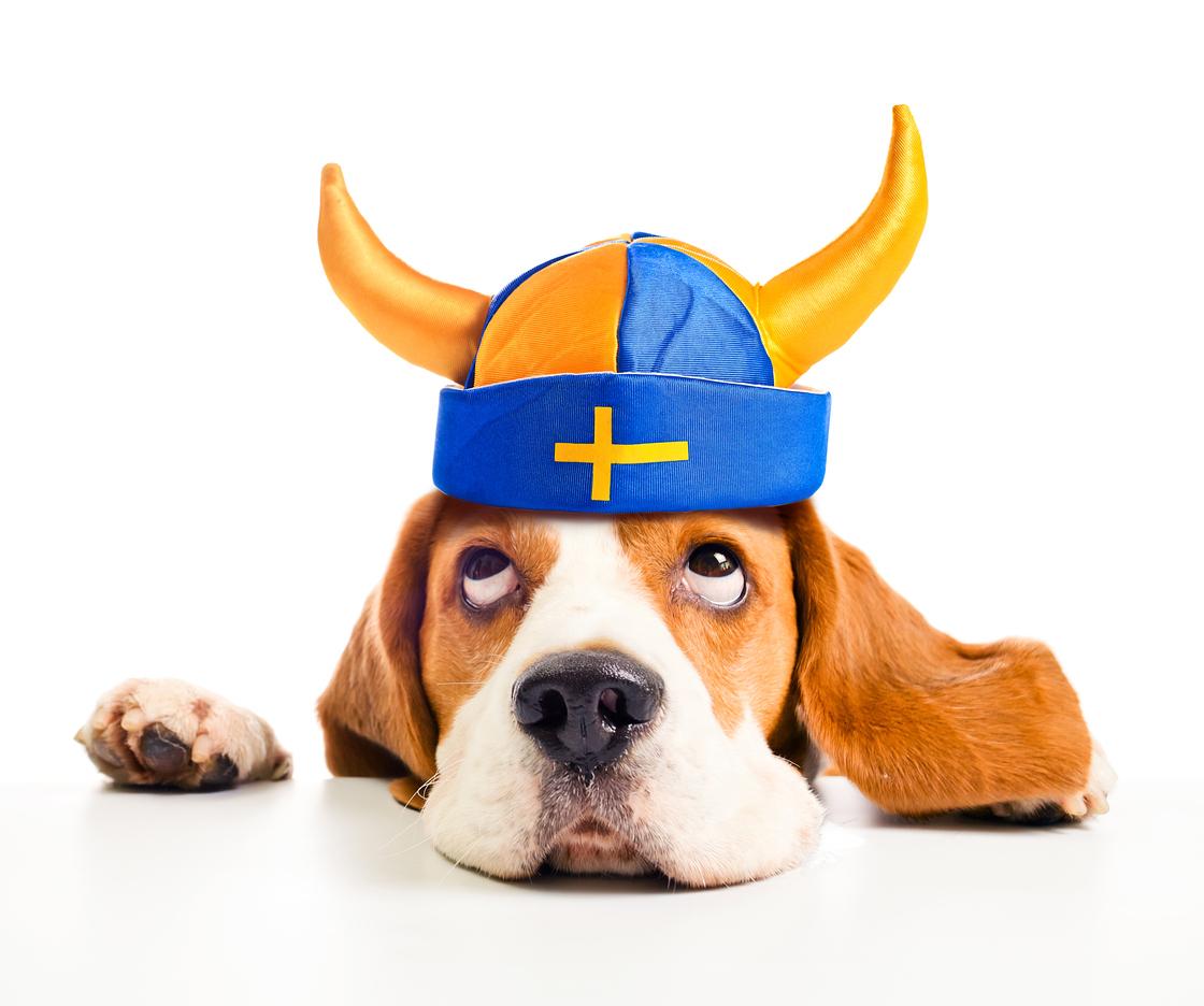 Sverige har EU:s bästa förutsättningar för e-handel