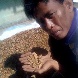 Nätbutiker och importörer slutar sälja bajskaffe
