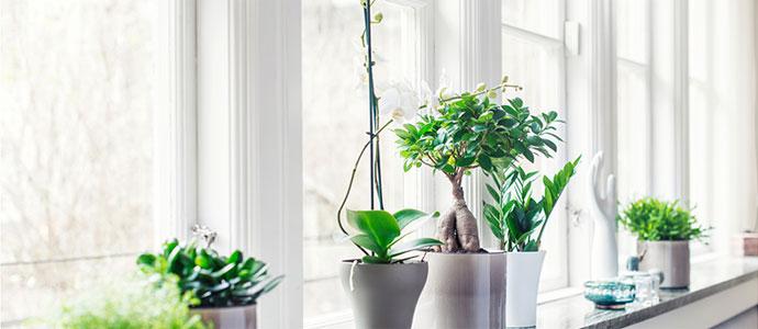 Ny sajt ska plantera ett litet frö hos besökaren
