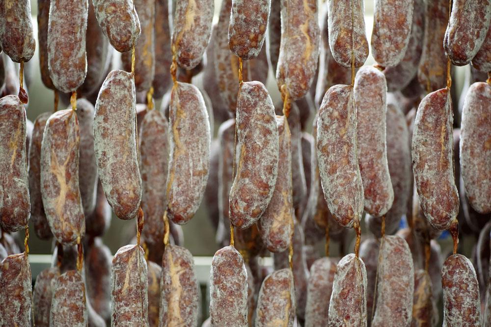 Tradera vill få skolklasserna att rata salamin